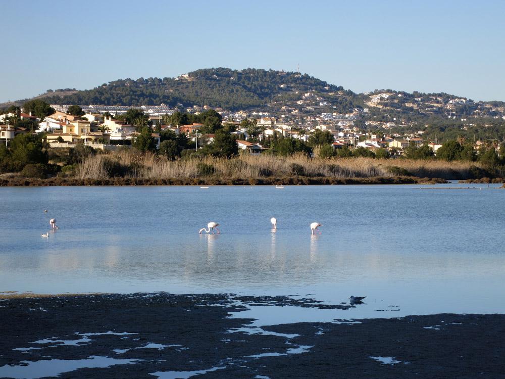 Paraje natural de Las Salinas, Calpe - Calp