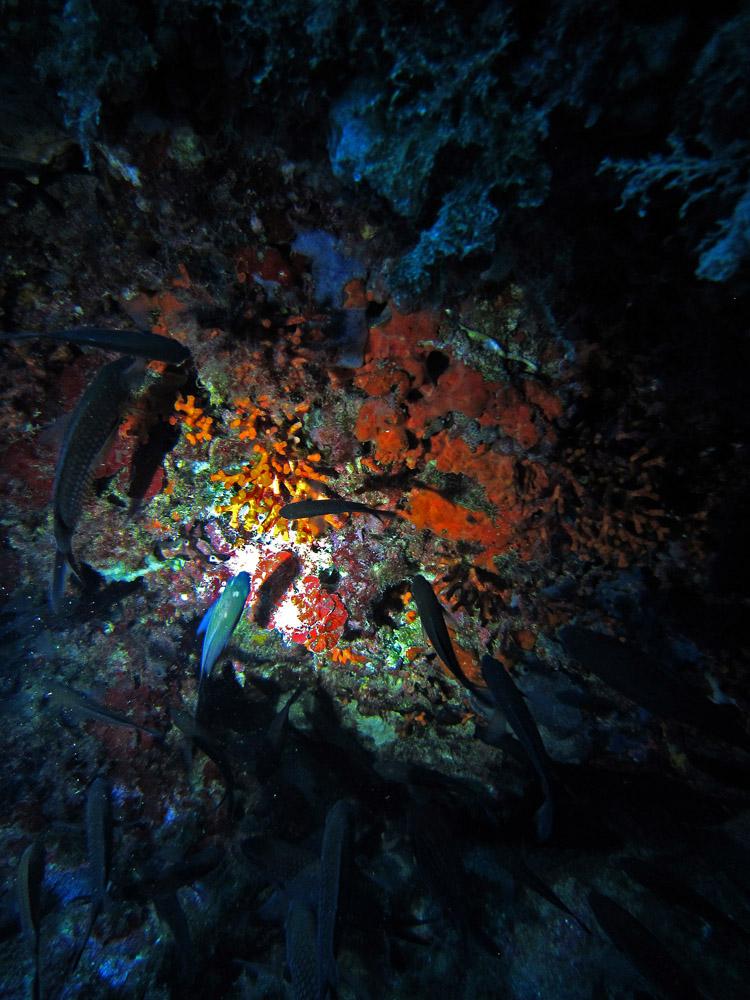 Coral de colores y castañuelas